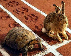 tortoise+and+hare
