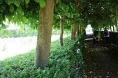 Leafy corridor