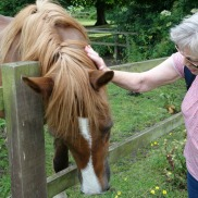Ham House friendly horsey