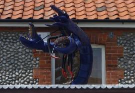 Norfolk blue lobster