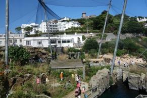 Devon netting over Living Coasts 2