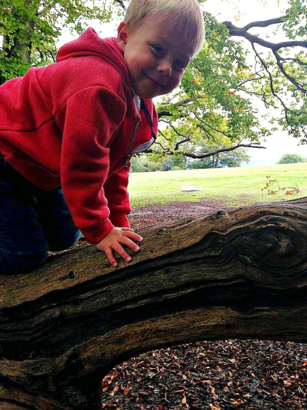 Box Hill - log climb