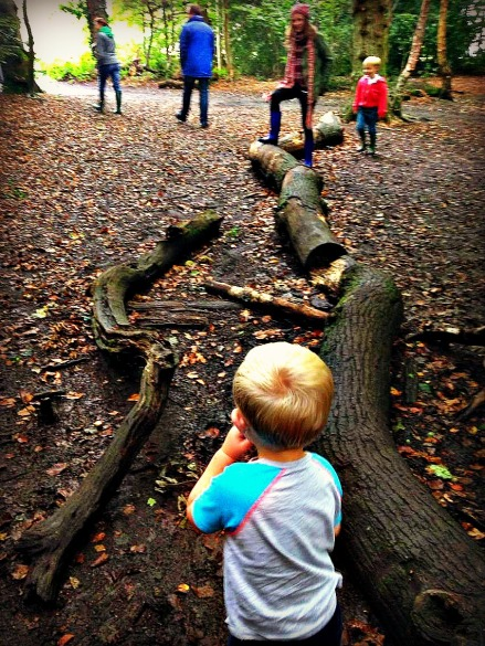 Box Hill - slippy logs